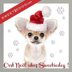 Noël chien - vêtements chien - jouets chien - accessoires chien - chihuahua - www.sweetiedog.com
