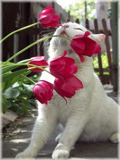 Take time to stop & smell the Tulips.