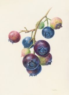 Connie Scanlon blueberriesx10