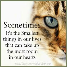 Wisdomtoinspirethesoul.com: The Smallest Things,,,,,,Size,,and weight is off no sufficient matter,,,it is the value that counts!!!!!!!!!!!!!!!!!!!!!!
