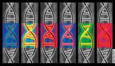 'Epigenética: Diversidad celular sin alteración de la secuencia del ADN' por Alexis Mendoza-León http://felixjtapia.org/blog/2013/09/11/epigenetica-diversidad-celular-sin-alteracion-de-la-secuencia-del-adn-por-alexis-mendoza-leon/