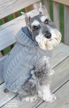 Miniature Schnauzer by Fix Your Images Photography #miniatureschnauzerclothes