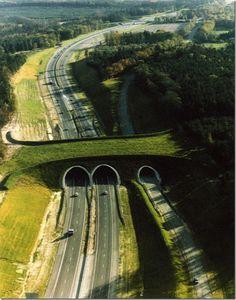 Quando estradas e ferrovias são construídas em meio a florestas e a áreas de preservação ambiental, como garantir a segurança e a saúde dos animais silvestres da região? Assim como existem passarel...