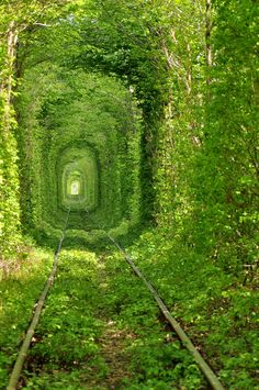Ukraine's green mile train tunnel. Greeeeen!