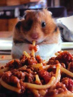 Hamsters love spaghetti.