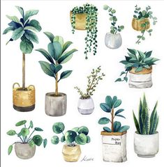 - My favorite indoor plants🌿 - - Paper Plant Painting, Plant Drawing, Plant Art, Watercolor Plants, Watercolour Painting, Plant Illustration, Watercolor Illustration, Painting Inspiration, Art Inspo