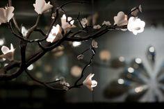 Cherry Blossoms by David Wiseman