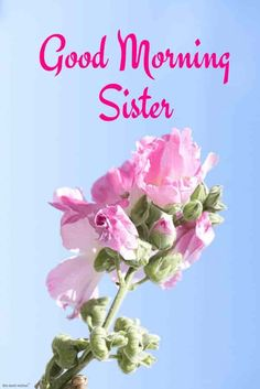 Looking for Good Morning Wishes for Sister? Start your day by sending these beautiful Images, Pictures, Quotes, Messages and Greetings to your Sis with Love. Good Morning Sister Images, Cute Good Morning Quotes, Good Morning Prayer, Good Morning Gif, Good Morning Photos, Morning Prayers, Morning Pictures, Good Morning Wishes, Brother Birthday Quotes
