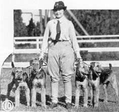Airedales c. 1940's