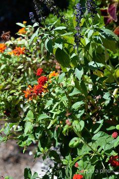 Flowers // addapinch.com