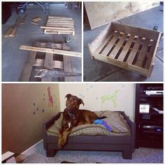 DIY wood materials dog beds from Euro pallets factual