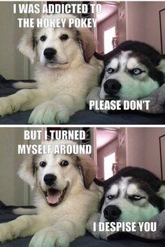 Husky Humor, Funny Husky Meme, Funny Dog Jokes, Funny Animal Quotes, Cute Funny Dogs, Cute Funny Animals, Stupid Funny Memes, Funny Relatable Memes, Funny Animal Humour