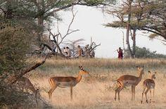 Walking Safari, Lake Manze, Selous Game Reserve, Tanzania