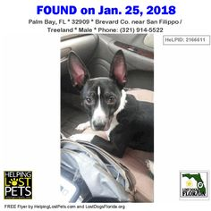 Is this your dog or do you recognize him?  Do you know this Dog? #PalmBay (San Filippo / Treeland)  #FL 32909 #Brevard Co.  #Dog 01-25-2018! Male #Unknown Black / White/Description: Black with white. Unaltered male approx 25 pounds. He is not chipped and not wearing a collar. He has been reported as found to Brevard Lost Pets and the Melbourne shelter.  CONTACT ATXCW7@YAHOO.COM Phone: (321) 914-5522  More Info Photos and to Contact: http://ift.tt/2Gp3bM4  To see this pets location on the…