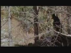 Dances With Wolves Final Scene and Credits2.flv