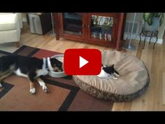 Funny Cats Stealing Dog Beds Compilation