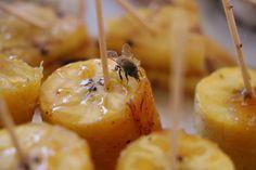 Alertan de aumento de muerte de abejas | NTR Zacatecas .com