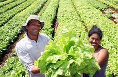 Pregon Agropecuario :: FAO CREA PLATAFORMA DIGITAL PARA AGRICULTORES FAMILIARES - Agricultura - Conceptos y Perspectivas