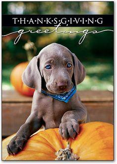 THANKSGIVING DOG PHOTOS