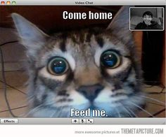 Webcam cat