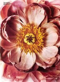 Resultado de imagen para irving penn flowers