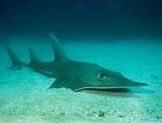 Surprising News about Sharks and Rays #ProjectAWARE #sharks