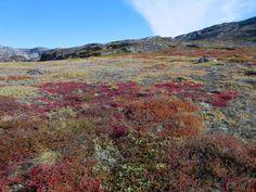 Tundra blankets the lowlands near Eqip Sermia Glacier in Western Greenland.