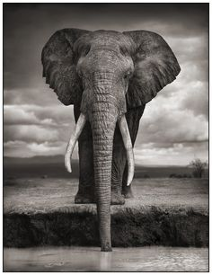 Click through on this image. I promise you will not be disappointed! Spectacular photography from Nick Brandt of UK. One of my dreams is to go on an African photo safari... a relative of mine has one planned for this year and I am so very inspired! ~KF