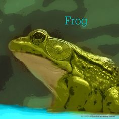 December 3, 2015 Totem Card of the Day - Frog :http://bearmedicinewalker.com/2015/12/03/december-3-2015-totem-card-of-the-day-frog/