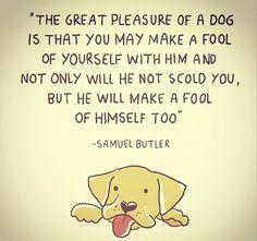 Dog Sayings, Dog Quotes, Doggies, Dogs And Puppies, Goofy Dog, Border Collies, Rainbow Bridge, Golden Retrievers, Pet Stuff