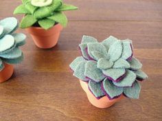 piante grasse in pannolenci