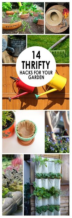 Gardening, home garden, garden hacks, garden tips and tricks, growing plants, gardening DIYs, gardening crafts, popular pin.