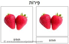 Hebrew Fruit Cards - 27 Culinary Fruits in 3-Part Cards in Hebrew.
