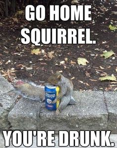 Serves him right. Stealing my nuts.