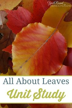 All About Leaves Unit Study - Year Round Homeschooling