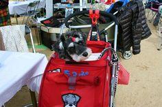 Cutie in her little red doggie stroller!