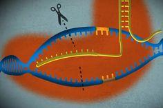 CRISPR_LEAD.0.jpeg (1420×947)