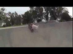 Cachorro manda muito bem no skate - YouTube #animais #proteja #salve