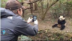 Lee, You observe the panda, we'll observe you