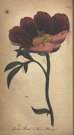 https://flic.kr/p/bVgKrn | n254_w1150 | The illustrated botany :. New York :J.K. Wellman,1846-1847.. biodiversitylibrary.org/page/39675784