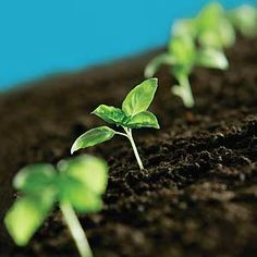 Top 10 Seed-Starting Veggies  Save money and garden space by growing these veggies from seed.