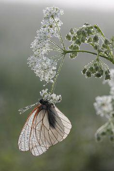 Gentle beauty...