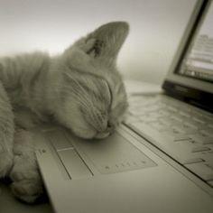 Des chercheurs sont parvenus à prouver l'impact du sommeil sur la quantité de graisse corporelle des personnes étudiées : oui, dormir fait maigrir !!