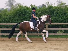 Natalie has her eye on a paint for dressage
