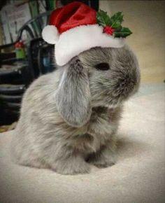 A Christmas rabbit