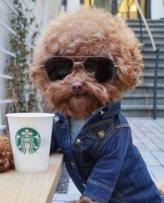Cute dog  #sunglasses