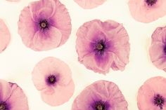 Beautiful Pink Watercolour Poppies wall art for girls' rooms (mural/ canvas/ art print)