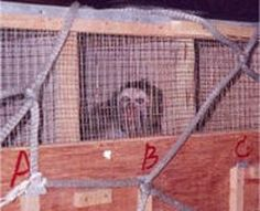 Sign Petition: Tell Vietnam Airlines- Stop Transporting Research Primates Primates, Mammals, Injustices In The World, Violation Of Human Rights, Animal Rights Groups, Vietnam Airlines, Serengeti National Park, Save Nature, Animal Graphic