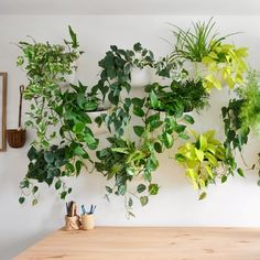 Using the WallyGro system for an easy-install plant wall. And, the updates … - Alles über den Garten Gardens Of Babylon, Hanging Plants, Hanging Garden, Plant Life, Wall Planters Indoor, Plant Wall, Beautiful Living, Indoor Plants, Indoor Plant Wall