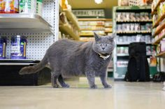 This Comedian Did a 'Humans Of New York' Parody ... With Cats. And It's Awesome. - egokick.com